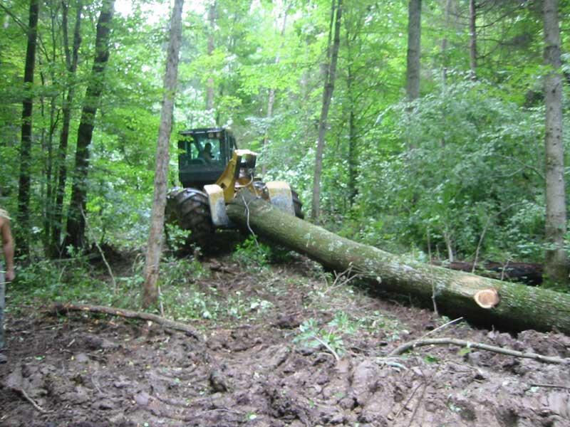 Bear Hollow Indiana Logging